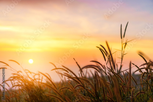 Spoed Foto op Canvas Oranje Yellow meadow with sunrise at morning, Selective focus.