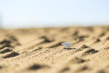 ミニチュアストーリー 砂漠を旅するシロクマ