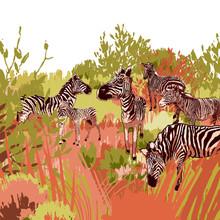The Herd Of Zebras Sowing In S...