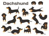 Fototapeta Fototapety na ścianę do pokoju dziecięcego - dachshund,dog in action,happy dog