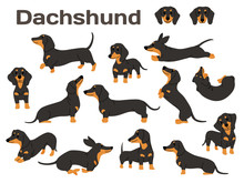 Dachshund,dog In Action,happy ...