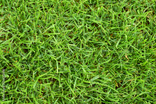 Cadres-photo bureau Herbe Lawn green grass cutted top view