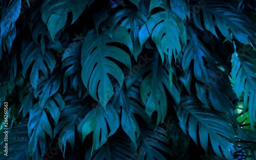 ciemnoniebieski-tropikalny-wzor-lisci-palmowych