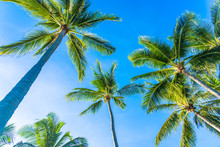 Beautiful Tropical Nature With Coconut Palm Tree On Blue Sky And White Cloud