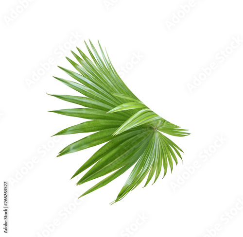 tropical nature green fan palm leaf pattern on white Wall mural
