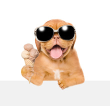 Puppy With Open Mouth Holding Ice Cream Above Empty White Board. Isolated On White Background