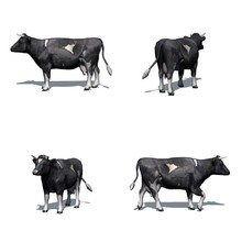Set Of Black White Cow With Shadow On The Floor - Isolated On White Background