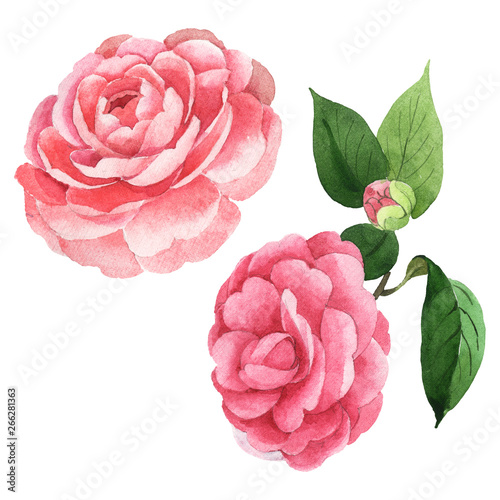 Canvas Pink camelia floral botanical flowers