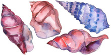 Summer Beach Seashell Tropical Elements. Watercolor Background Illustration Set. Isolated Shells Illustration Element.