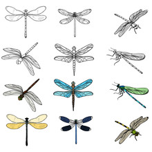 Vector, Isolated, Insects Drag...