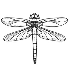 Dragonfly, Sketch Of Lines, Icon