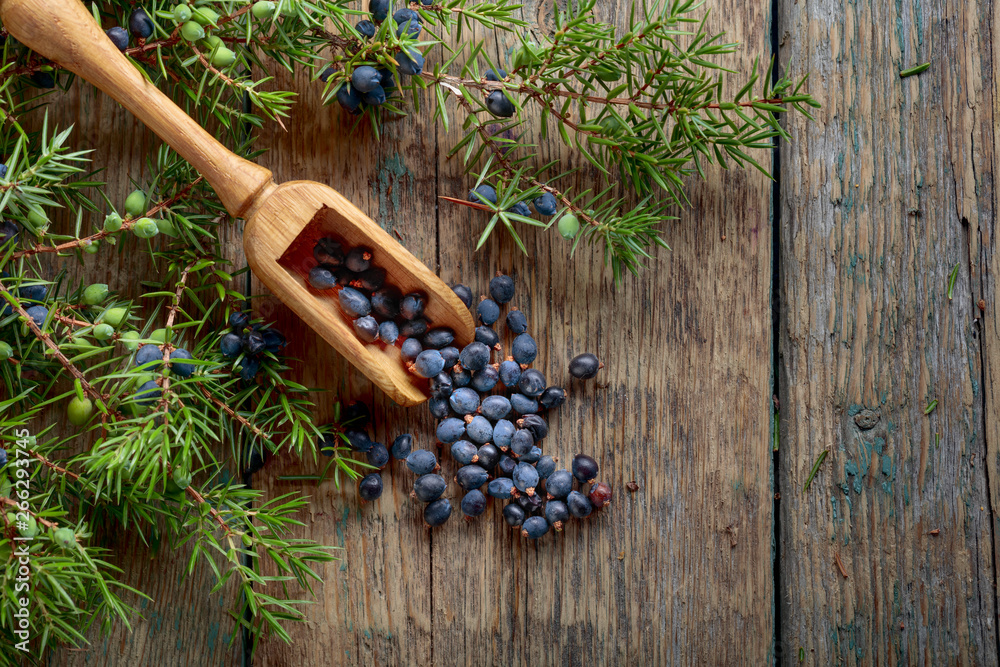 Fototapety, obrazy: Juniper branch and wooden spoon with berries on a wooden background.