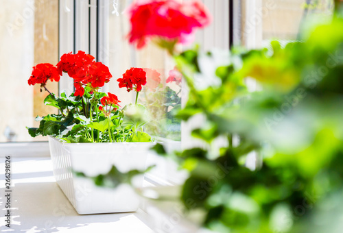 Red geranium flowers on windowsill at home balcony window Wallpaper Mural