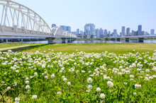 大阪 春の淀川河川敷
