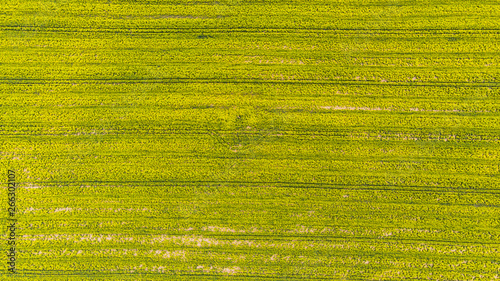 Leinwand Poster Yellow rape field at early spring, aerial view, drone photo