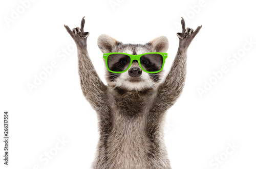 Funny raccoon in green sunglasses showing a rock gesture isolated on white background