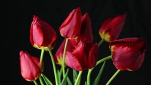 Red Tulips Flowers Blooming Ti...