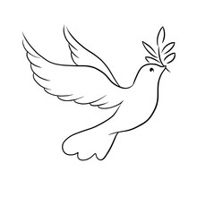 Beautiful Line Sketch Dove Bird Vector Illustration