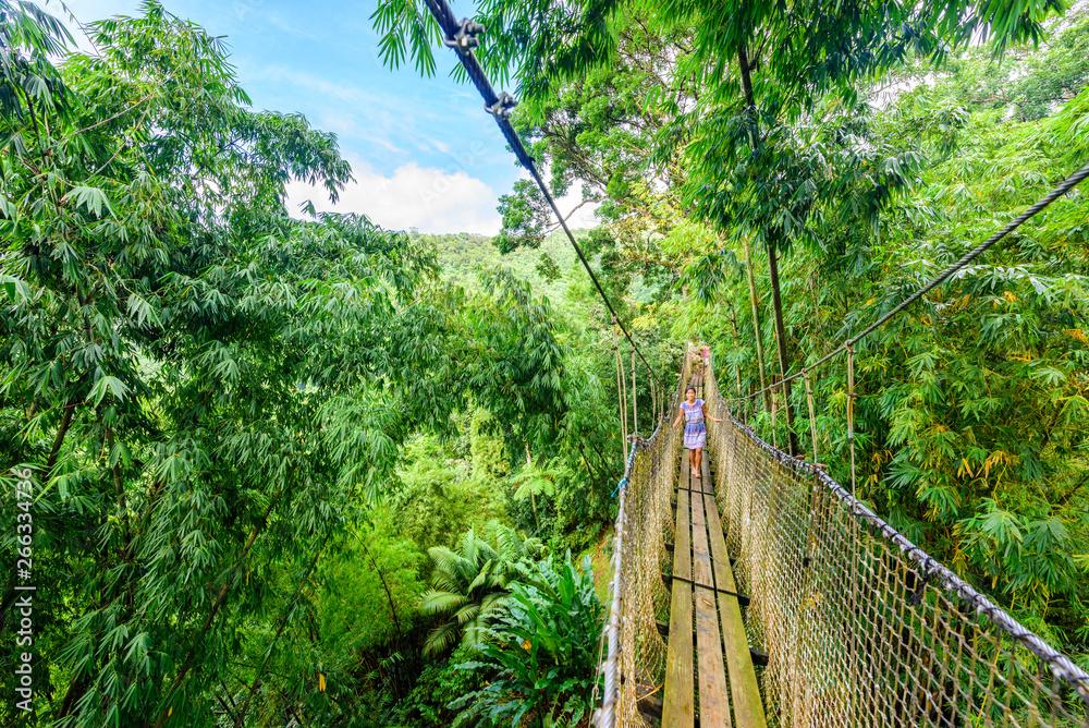 Fototapety, obrazy: Balata Garden, Martinique - Paradise botanic garden on tropical caribbean island with suspension bridges - France