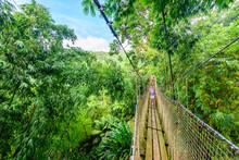 Balata Garden, Martinique - Paradise Botanic Garden On Tropical Caribbean Island With Suspension Bridges - France