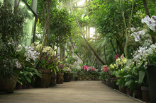 Boardwalk In Orangery. Exotic Plant Collection. Winter Garden. Moscow State University Botanical Garden (Aptekarskiy Ogorod), Moscow, Russia