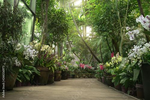 Cadres-photo bureau Jardin Boardwalk in orangery. Exotic plant collection. Winter garden. Moscow State University botanical garden (Aptekarskiy Ogorod), Moscow, Russia