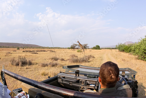 Fotomural  game ranger on safari showing guests wildlife in Africa with a giraffe