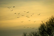 A flock of birds flying in the autumn behind the sun