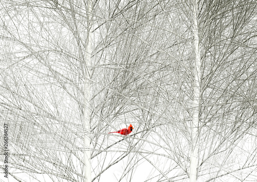 Cuadros en Lienzo A cardinal is seen in a tree in a snowstorm.