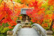 京都の紅葉 秋・観光