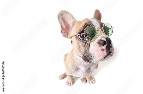 Foto auf Leinwand Französisch bulldog Cute french bulldog siting isolated on white