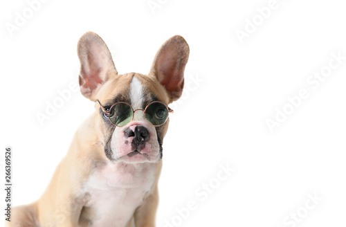 Poster Bouledogue français Cute french bulldog wear sunglass isolated
