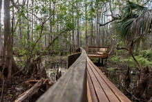 Wooden Trail Through The Wetlands Of A Cypress Swamp