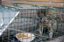 écureuil En Cage