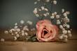 canvas print picture - Rosa Blüte auf Holz mit Schleierkraut