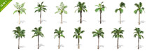 3D Rendering - 14 In 1 Collection Of Tall Coconut Trees Isolated Over A White Background Use For Natural Poster Or  Wallpaper Design, 3D Illustration Design.