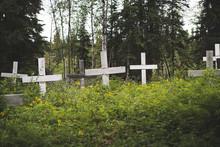 White Crosses Overgrown By Lush Vegetation In Alaskan Cemetery