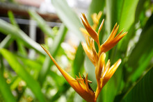 Close-up Of Tropical Flower
