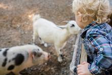 Boy Looking At Farm Animals At...