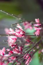 Detail Of A Little Pink Flower