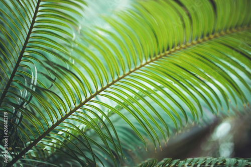 In de dag Khaki nature poster. leaf of palm