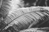 plakat przyrodniczy. liść palmy - 266402521