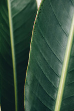 Mecro Detail Of Two Tropical L...