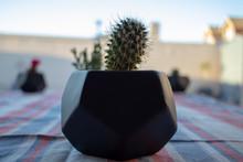 Cactus Close Up In Black Vase