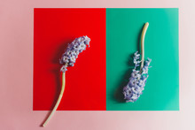 Hyacinths On Colorful Paper