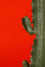 Thorns Of Green Cactus On Red