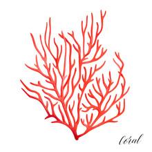 Ocean Red Coral. Tropical Reef Sealife. Watercolor Illustration.