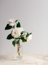 White Camellias In Glass Vase