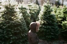 Hooded Kid At Christmas Tree Farm