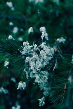 White Plant At Dusk